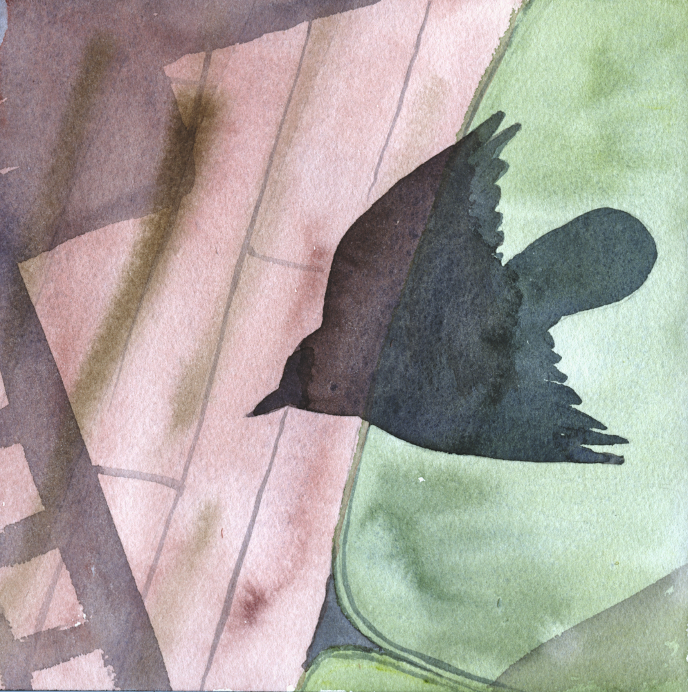 watercolor illustration of a bird shadow by Alexandra Schaefers