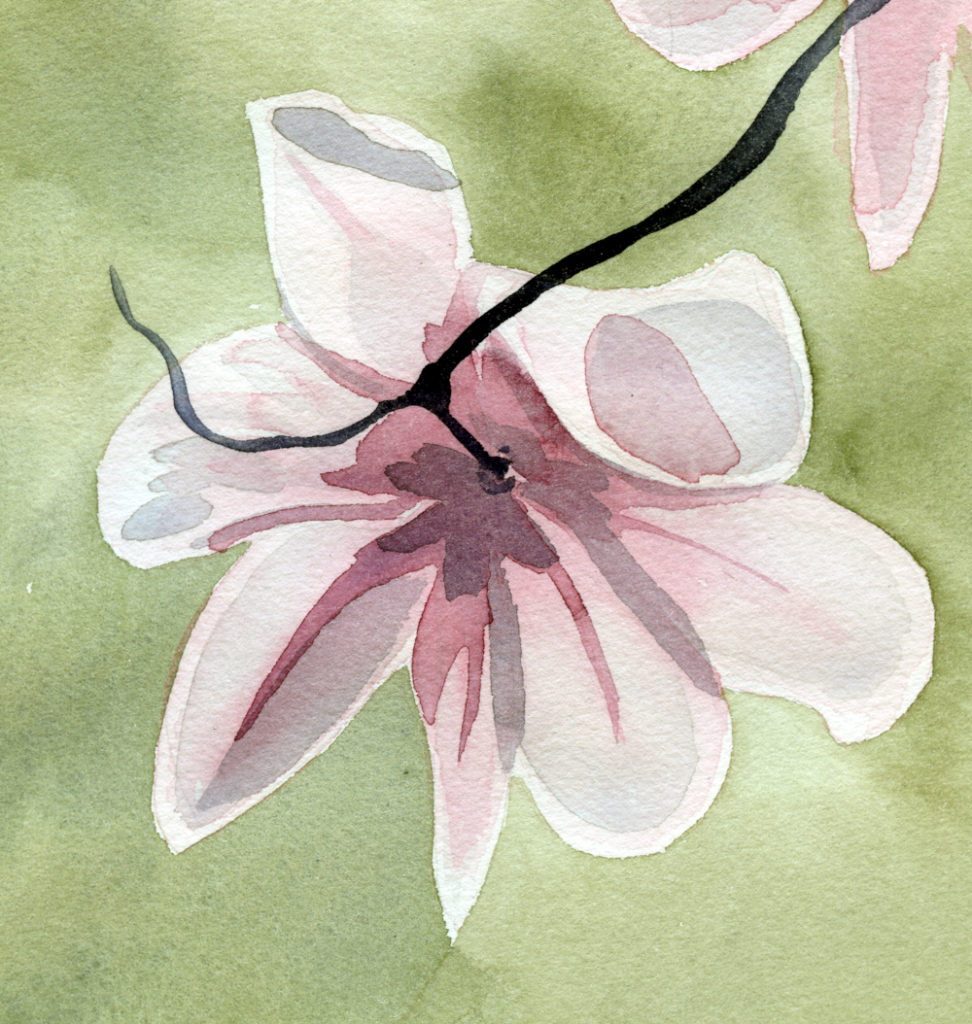 watercolor painting of a magnolia blossom by Alexandra Schaefers