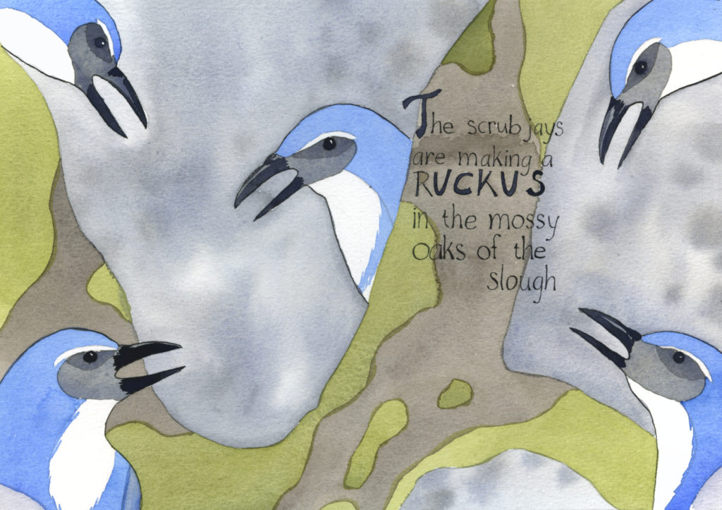 "Pages 1 and 2 of ""In the Slough"" a watercolor illustration by artist Alexandra Schaefers of scrub jays in an oak. Hand-written text reads: The scrub jays are making a ruckus in the mossy oaks of the slough."
