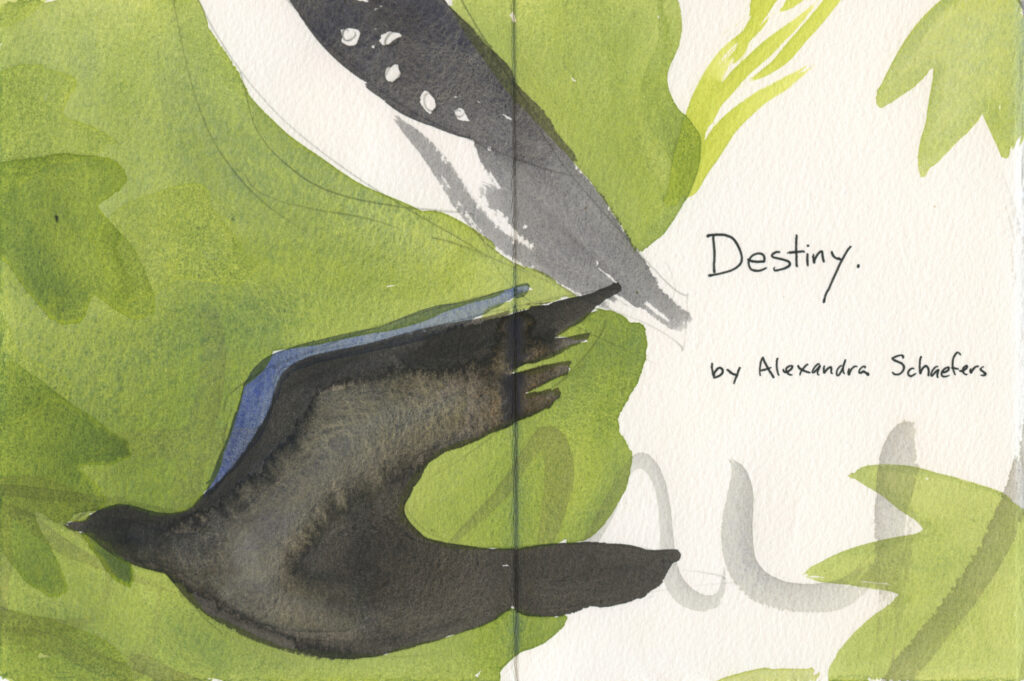 "book pages with painted bird shapes and leave, handwritten text reads, ""Desinty. By Alexandra Schaefers"""