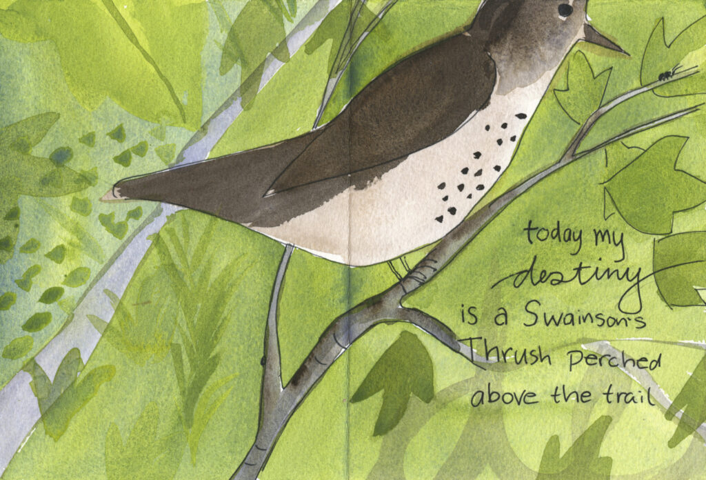 "book pages with painting of a Swainson's thrush in leafy tree branches above a trail. Handwritten text reads, ""today my destiny is a Swainson's thrush perched above the trail"""