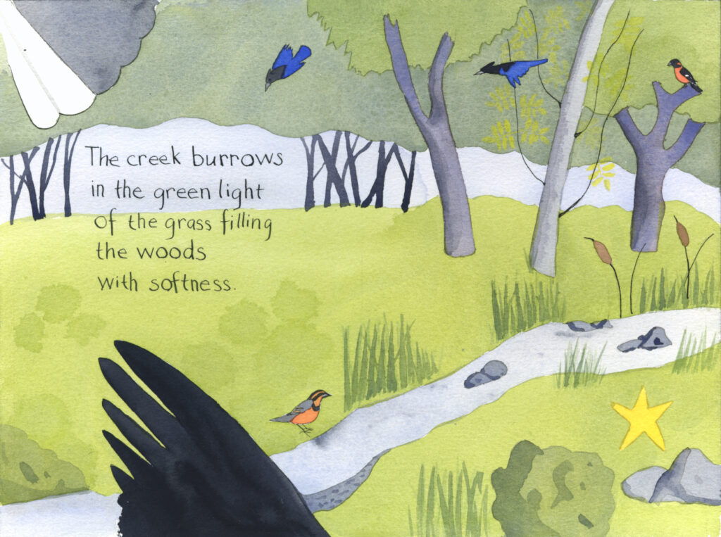 watercolor illustration of a creek in a wooded area with stellar jays, grosbeak, varied thrush. Handwritten text reads, The creek burrows in the green light of the grass filling the woods with softness.""