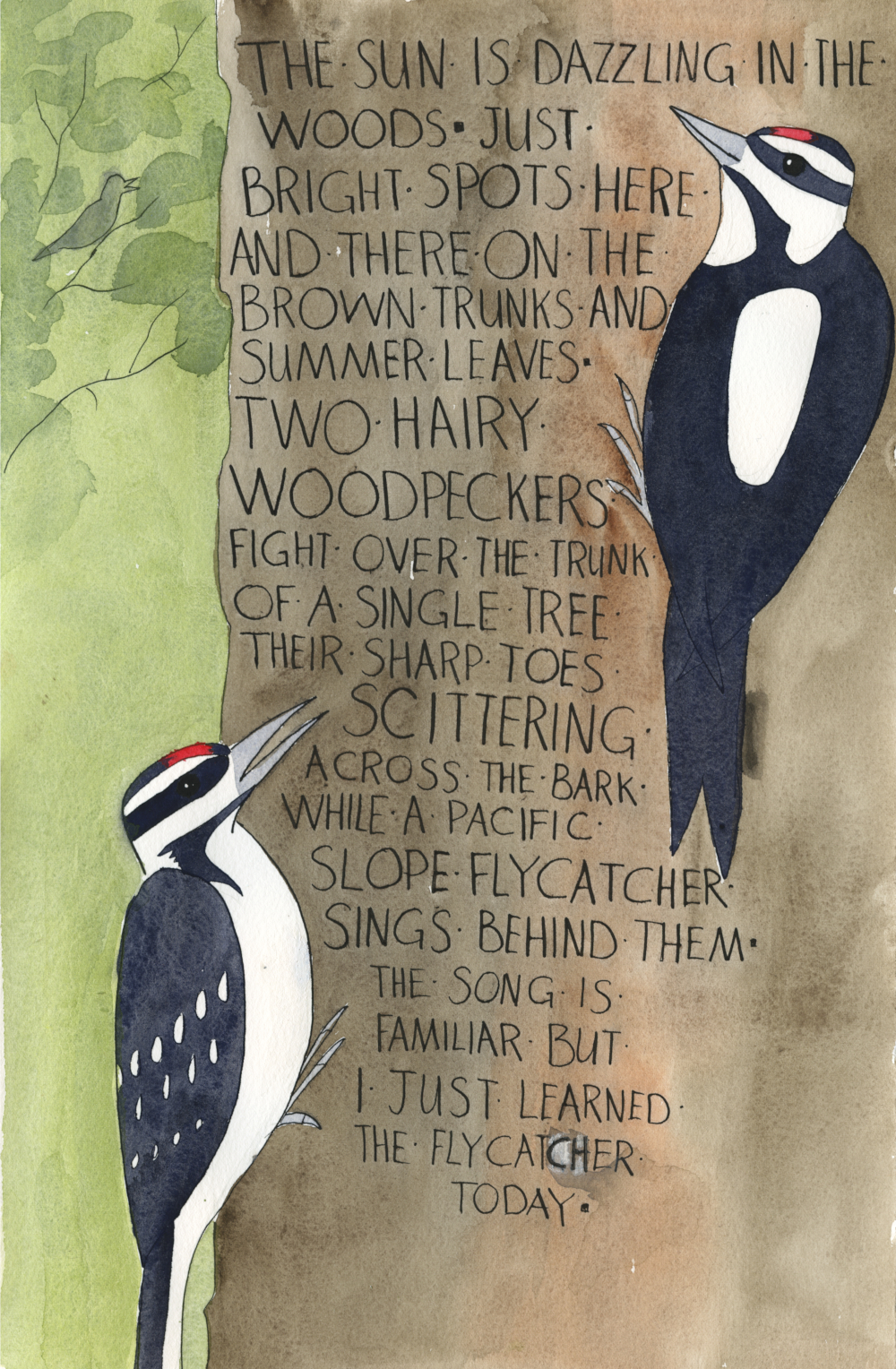 "Illustration of 2 hairy woodpeckers on a tree. Hand written text reads: ""The sun is dazzling in the woods. Just bright spots here and there  on the brown trunks and the summer leaves.  Two hairy woodpeckers fight over a single tree trunk, their sharp toes scittering across the bark while a Pacific Slope Flycatcher sings behind them.  The song is familiar but I just learned of the flycatcher today."""