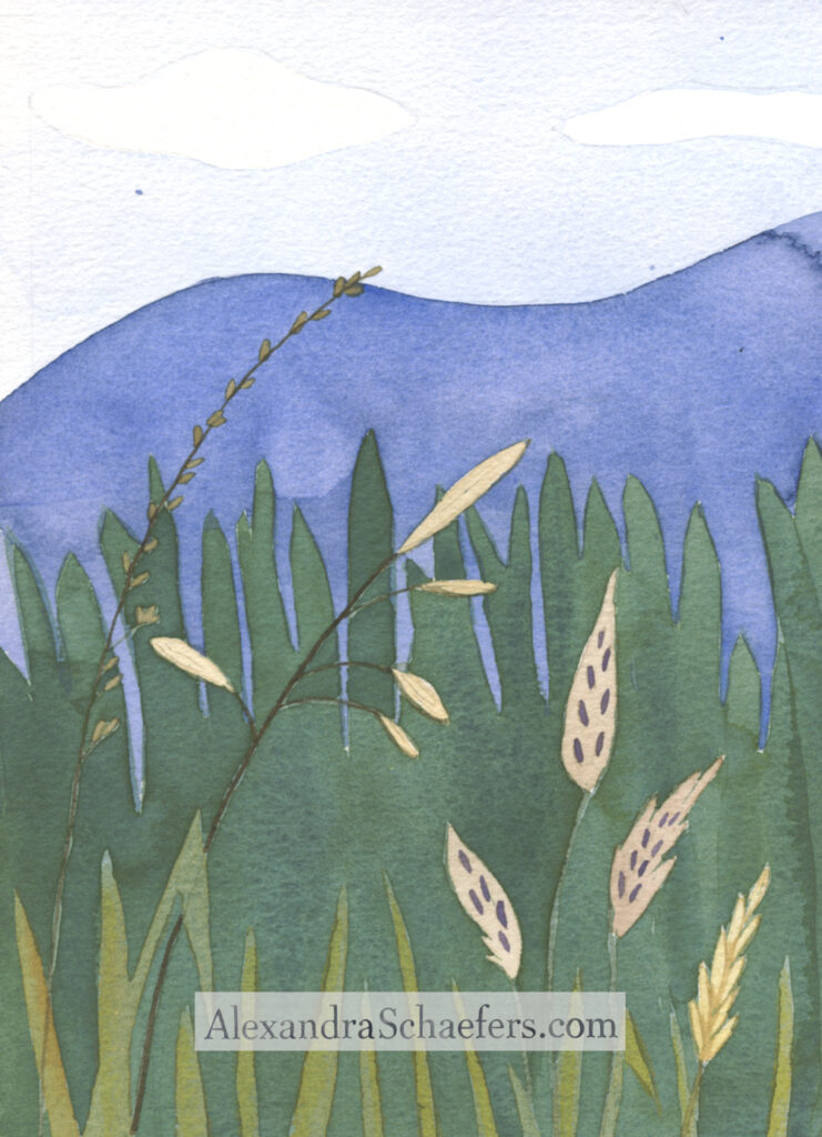 "back cover of ""In the Dry Grass"" meadow grasses and blue hills"