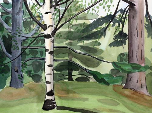 Alexandra Schaefers Birch at Hoyt Arboretum