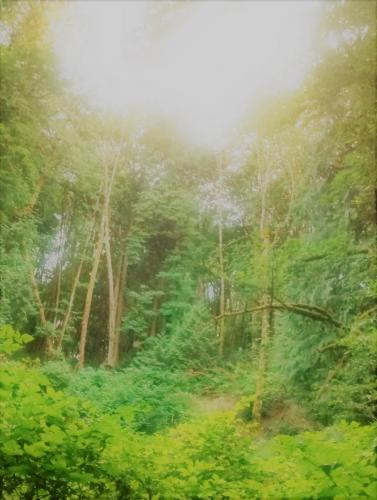 Tryon Creek State Park 2