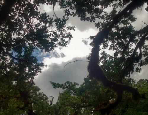 Mulkey Ridge Trail