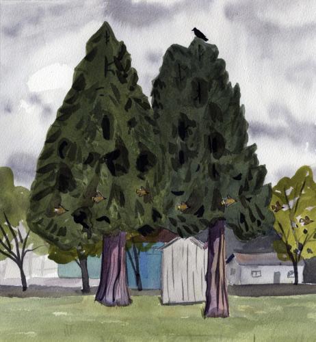 Saint John's Cedars