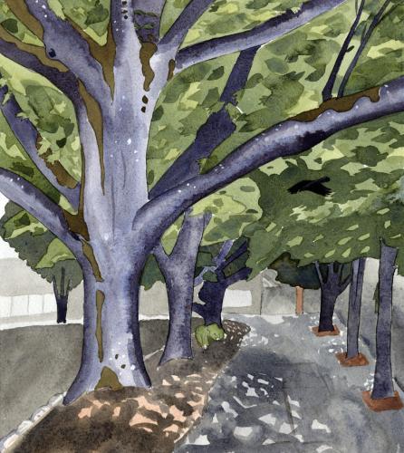 Saint John's Oaks with Crows