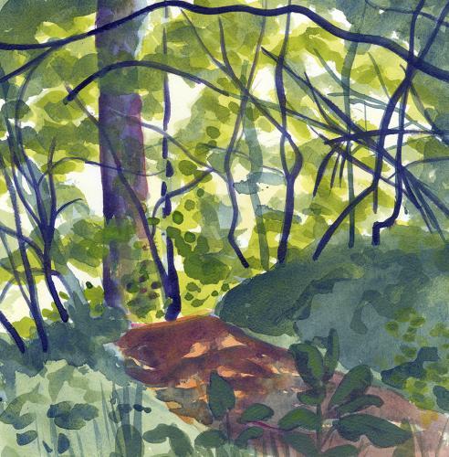 White Pine Trail