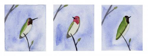 Anna's Hummingbird Catching the Light