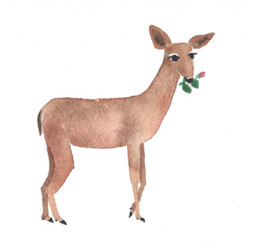 deer with rose